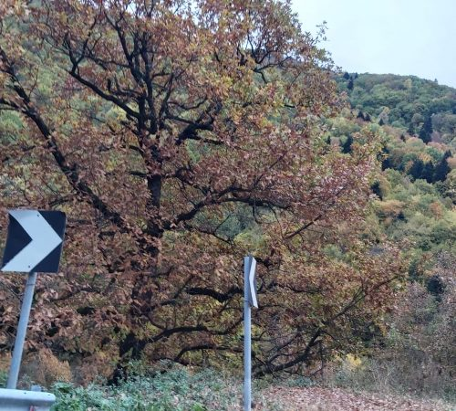 routes-by-car-dimatis.eu